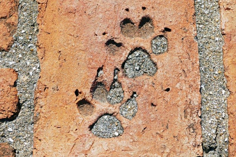 Orme antiche del cane sul pavimento rovinato antico del mattone del tempio nella città storica di Ayutt fotografie stock libere da diritti