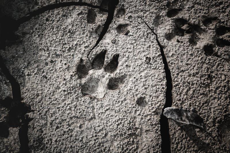 Orme del cane alla terra incrinata fotografia stock