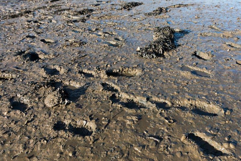 Orme nel fango del fiume fotografia stock