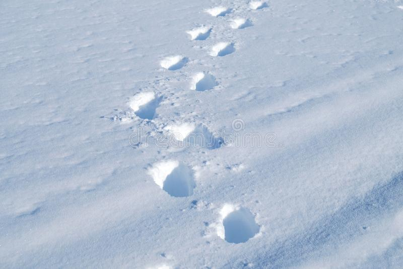 Orme in neve fresca immagini stock libere da diritti
