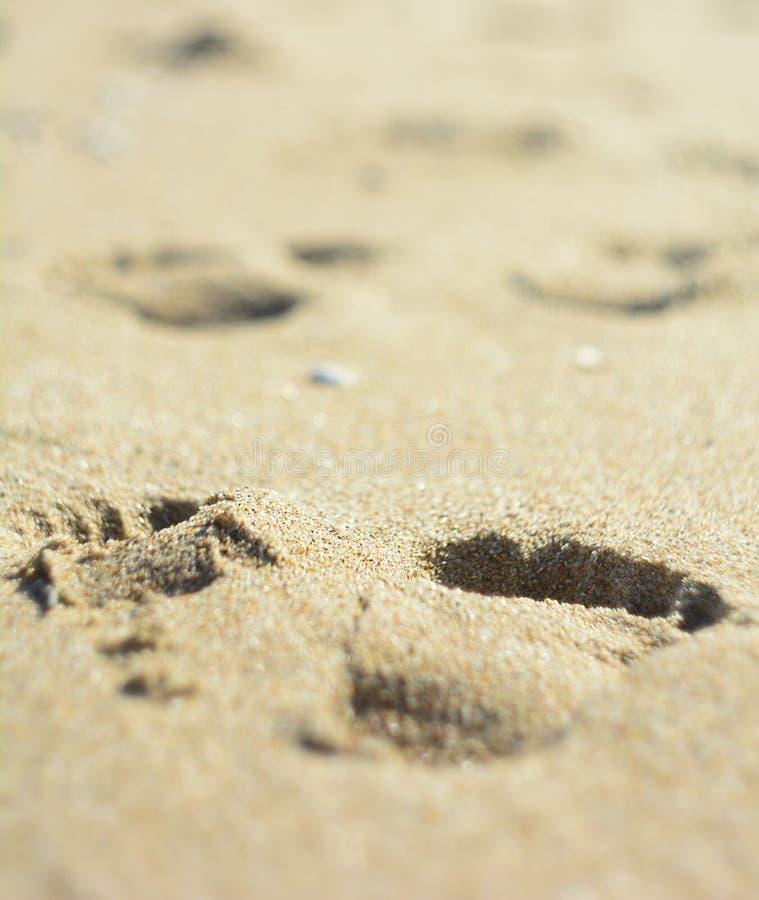 Orme o piede umane adulte di punti sulla sabbia bagnata gialla della spiaggia sulla superficie dell'acqua di mare all'aperto sull immagine stock libera da diritti