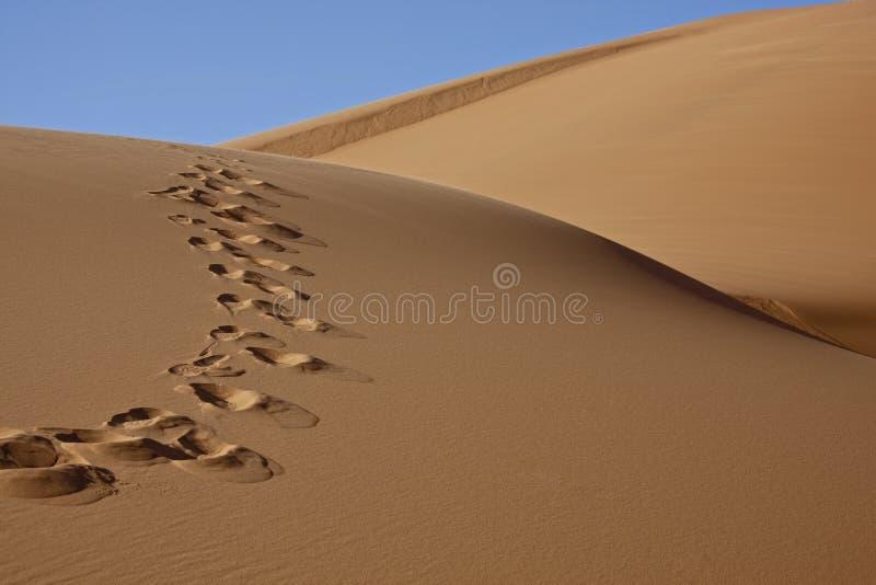 Orme in sabbia del deserto immagini stock