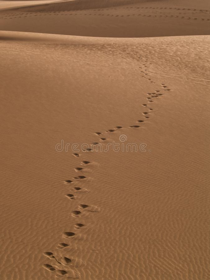 Orme sulle dune di sabbia dorate di Maspalomas fotografia stock