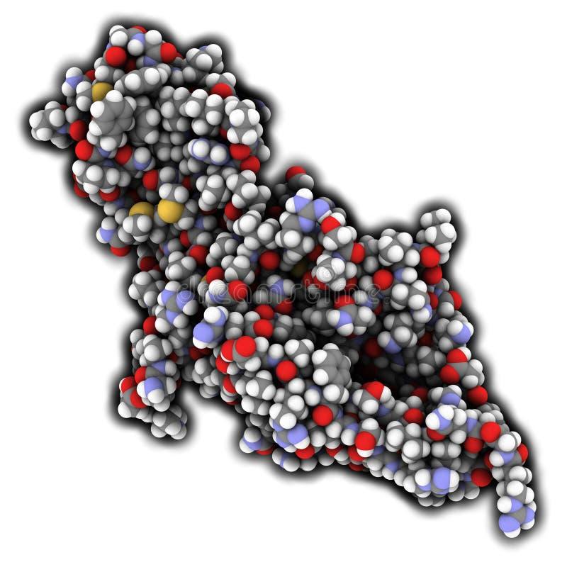 Ormone umano della glicoproteina della gonadotropina corionica (hCG), chemica illustrazione di stock