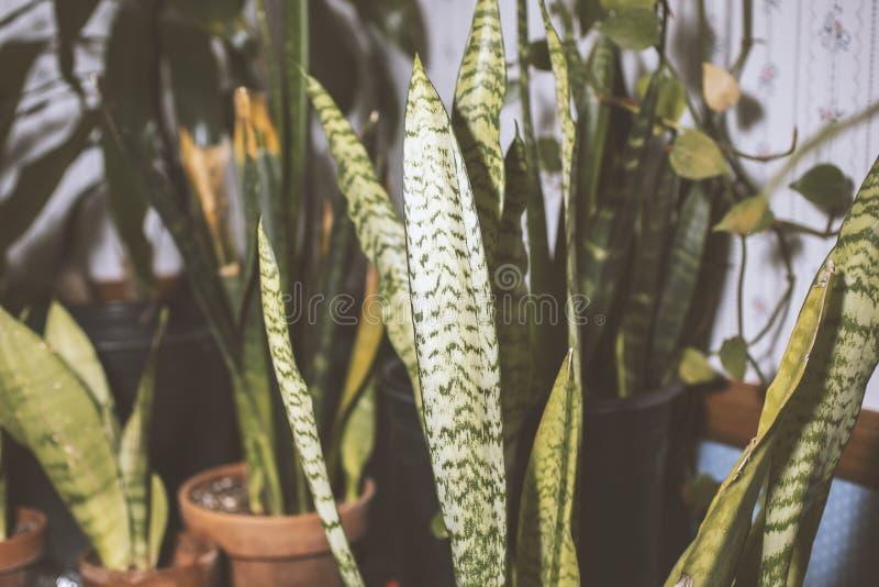 Ormväxter inom vardagsrummet arkivfoton