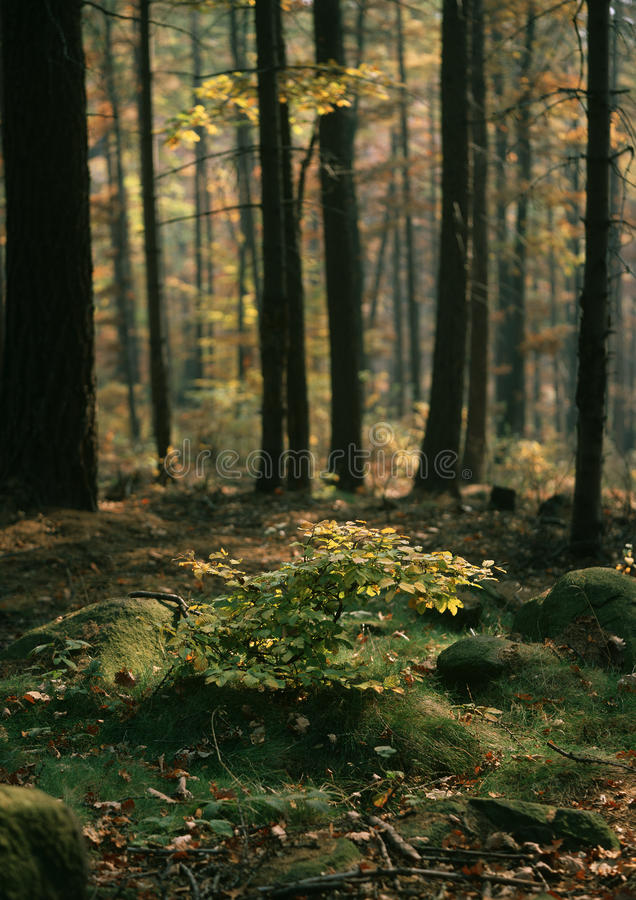 Ornament autumn forest
