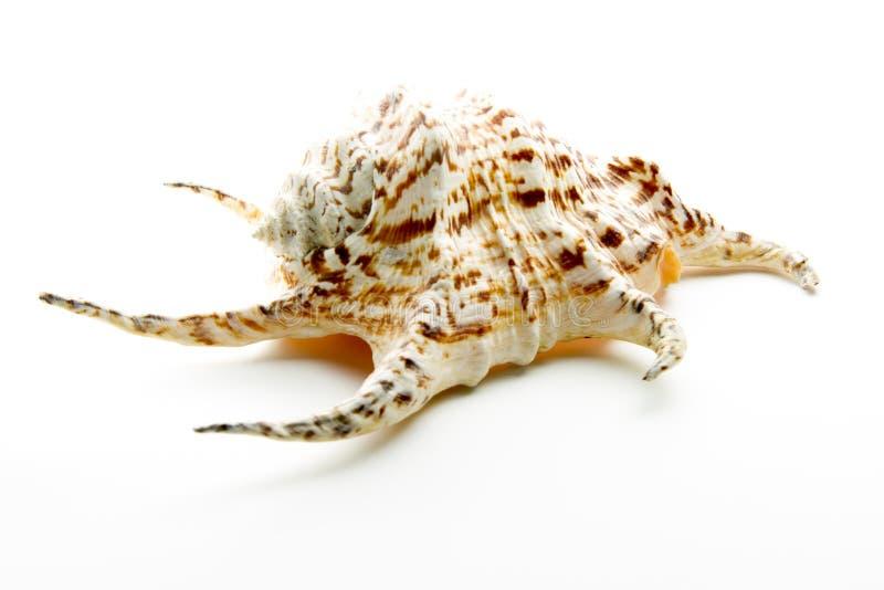 Ornament shell