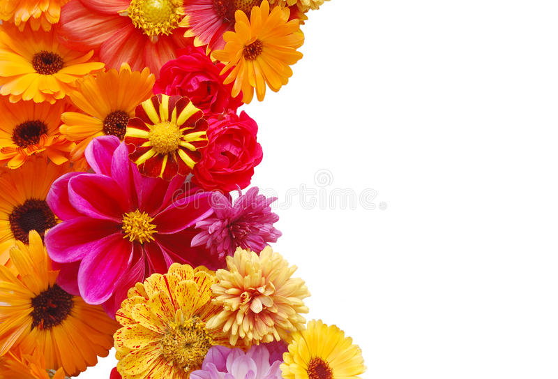 Download Ornament From Summer Beautiful Flowers Stock Photo - Image of flowers, vibrant: 10617890