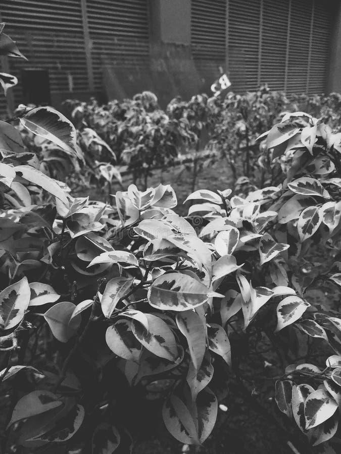 Ornamentacyjne rośliny zdjęcie royalty free