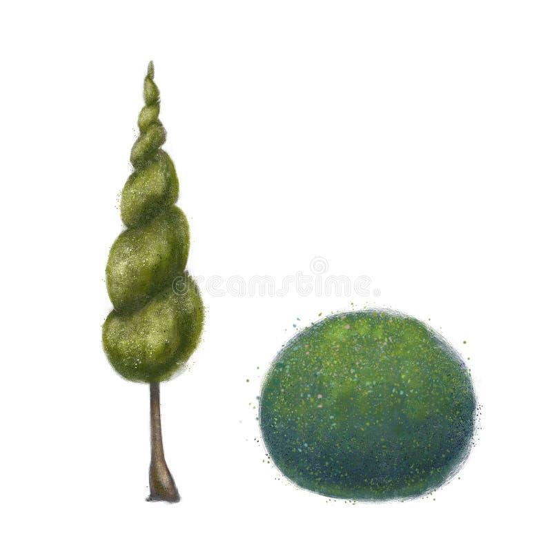 Ornamentacyjne rośliny dla parka i ogródu Pozbawiony drzewo i krzak projekta wysoki ilustraci krajobrazu planu fabu?y postanowien royalty ilustracja