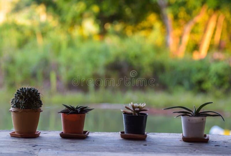 Ornamentacyjne rośliny w małych garnkach na drewnianych barach, naturalny zamazany tło fotografia royalty free