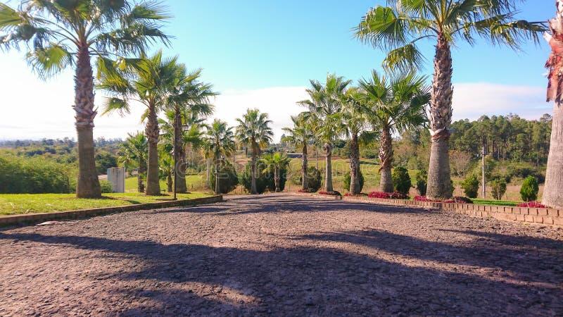 Ornamentacyjnego ogródu drzewko palmowe używać dla kształtować teren zdjęcia royalty free