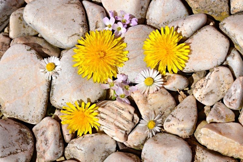 Ornamentacyjni kamienia whit kwiaty obraz royalty free