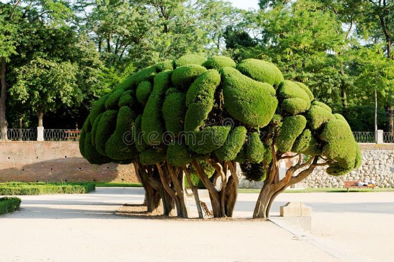 ornamentacyjny drzewo zdjęcie stock