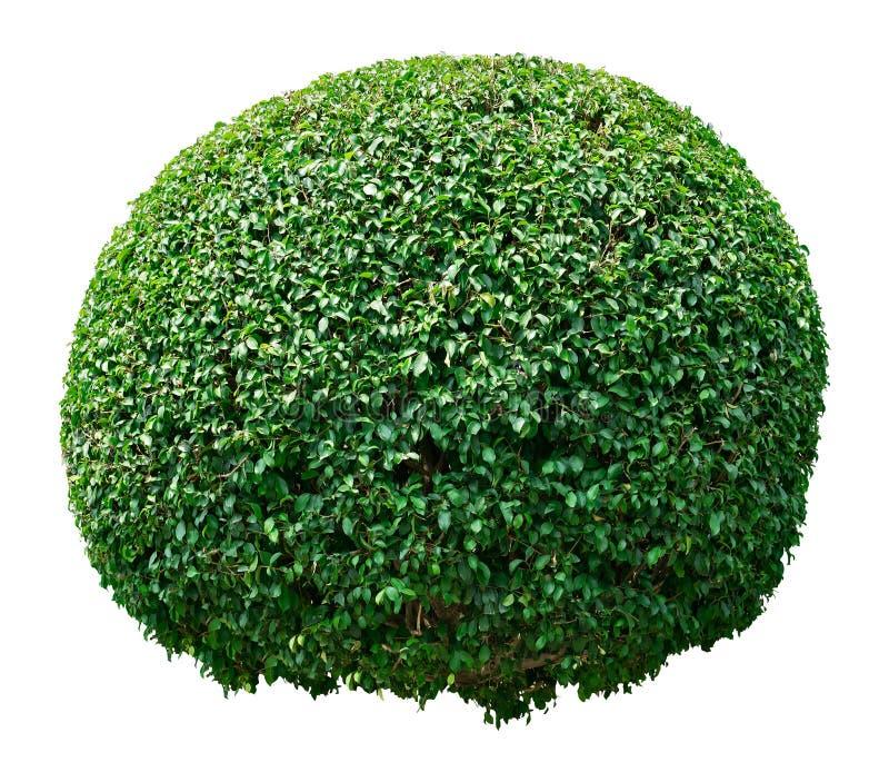 ornamentacyjny drzewo zdjęcia stock