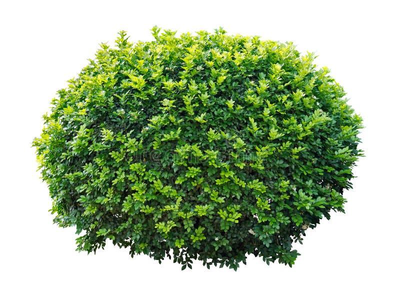 ornamentacyjny drzewo zdjęcie royalty free