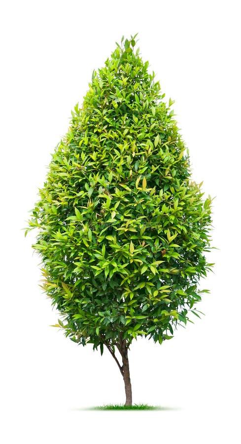 ornamentacyjny drzewo obraz stock