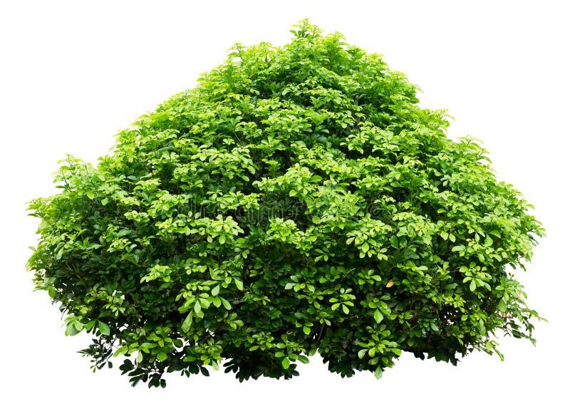 Ornamentacyjny drzewo obrazy stock