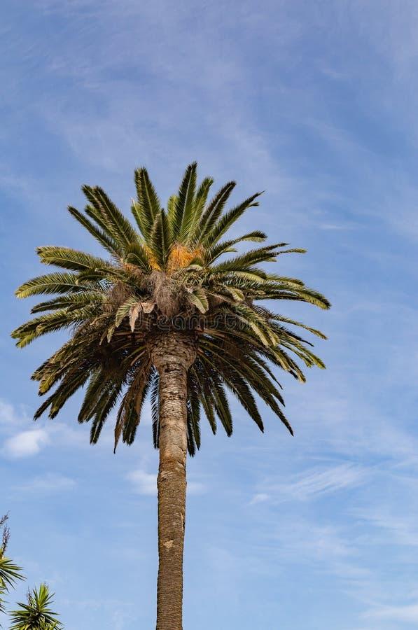 Ornamentacyjny palmowy baldachim na ulicach Los Angeles zdjęcie stock