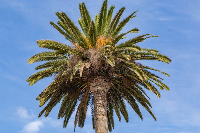 Ornamentacyjny palmowy baldachim na ulicach Los Angeles zdjęcie royalty free