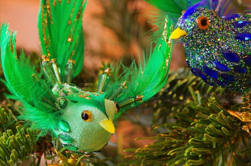 Download Ornamental Bird Stock Images - Image: 23655754