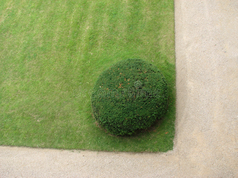 Ornamental Bush In The Garden Royalty Free Stock Photography