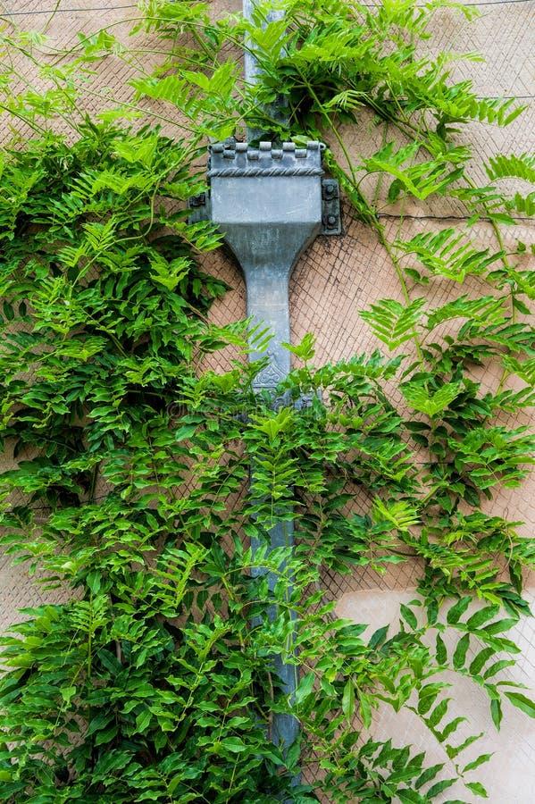 Download Ornamental drainpipe stock image. Image of downpipe, drain - 32540369