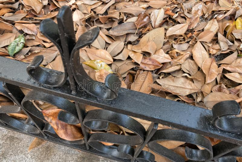 Magnolia Tree leaves against a fence. Ornamental fence contains piles of Magnolia leaves stock images