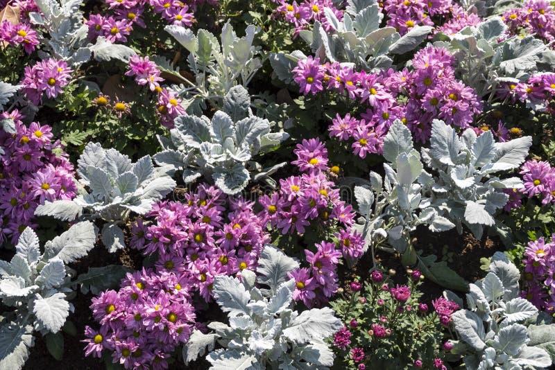 Ornamental flower garden royalty free stock images