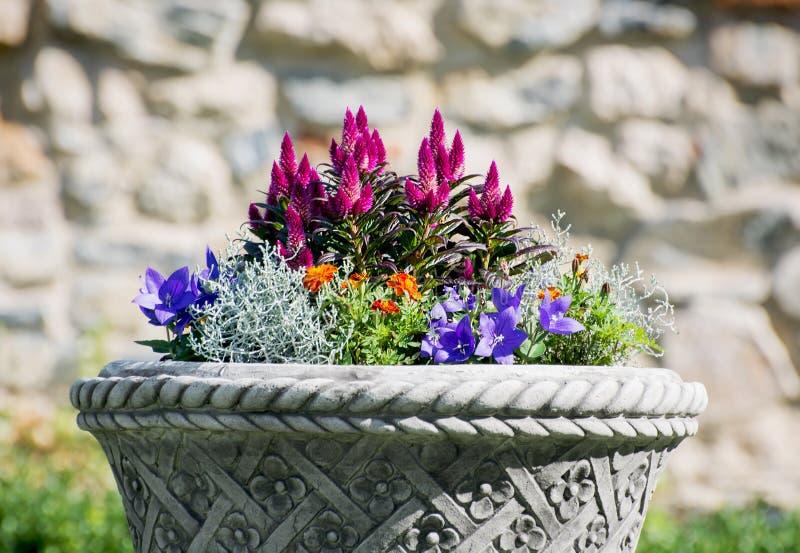 Ornamental flowerpot full of flowers. Ornamental stone flowerpot full of beautiful flowers stock image
