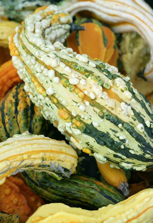 Download Ornamental gourd stock image. Image of ornamental, orange - 21456303