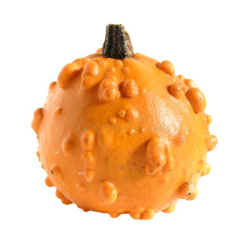 Free Ornamental Gourd (squash) Stock Photography - 3364332