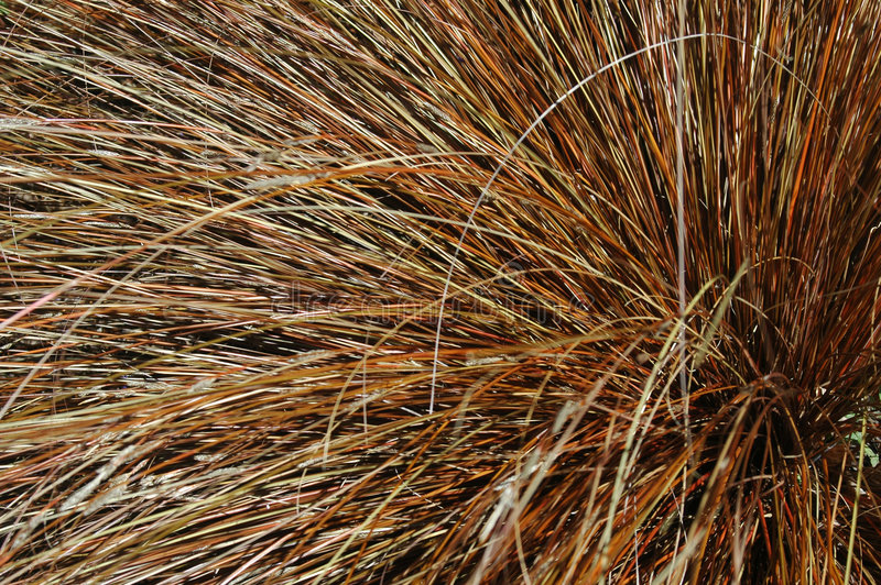 Download Ornamental Grass Stock Image - Image: 199651