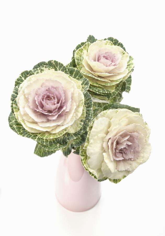 Ornamental kale in a pink vase with high key lighting. Ornamental kale in a pink vase with a high key lighting effect royalty free stock images