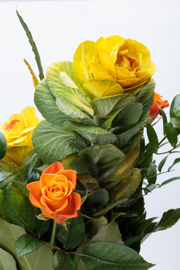 Ornamental kale. With yellow, orange, and green leaves (Brassica oleracea stock photos