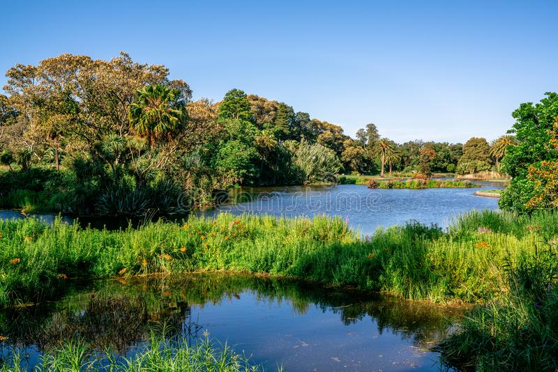 Ornamental lake view with trees and green nature at the Royal Botanical gardens in Melbourne Vic Australia royalty free stock photo