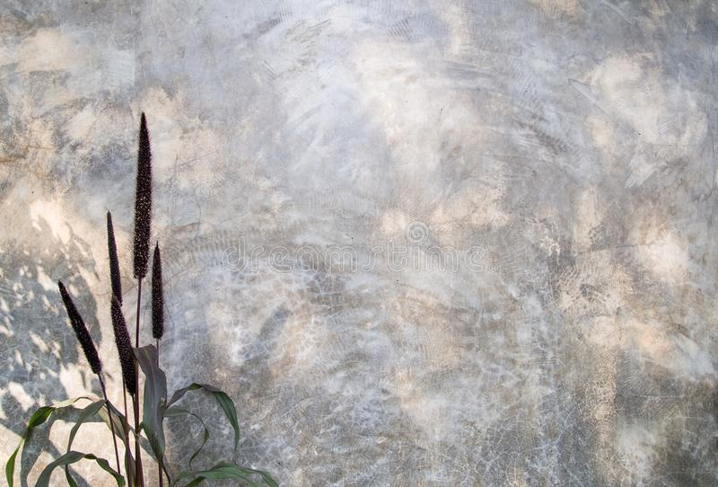 Ornamental millet with concrete wall stock photo