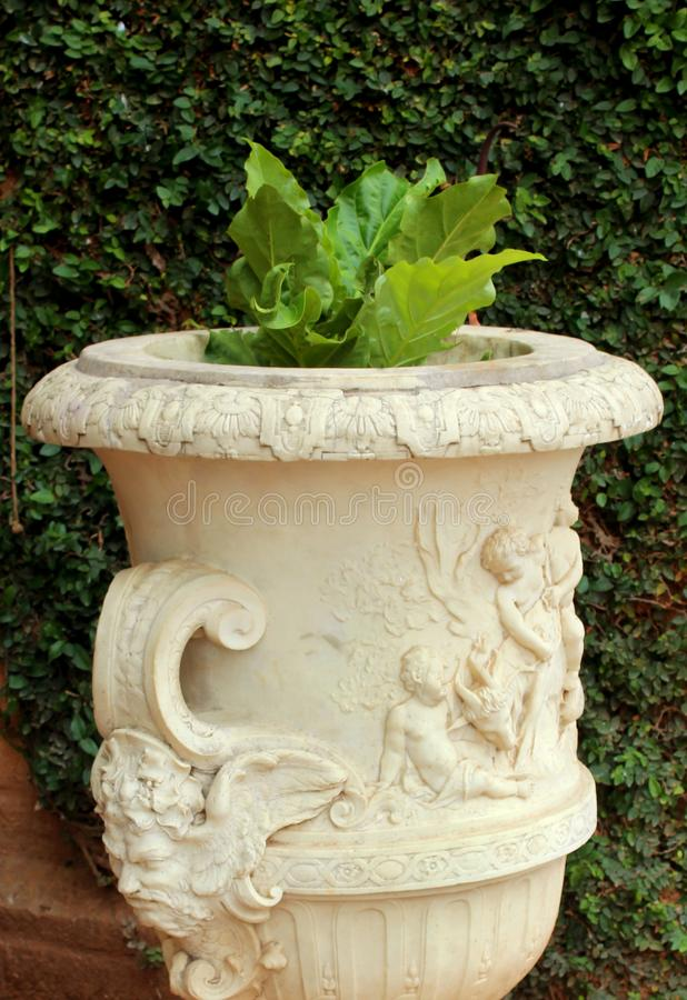 Ornamental plant in an antique cement pot. Ornamental plant in an antique cement pot on the stones with sunlight royalty free stock photos