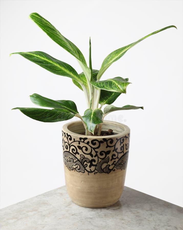 Ornamental Plants Stock Image