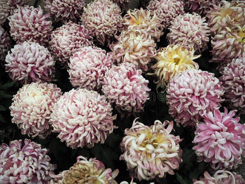 Ornamental plants background royalty free stock photo