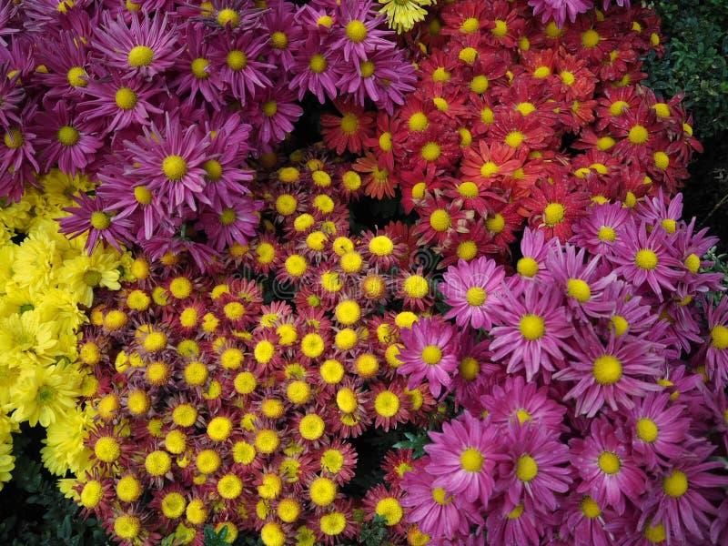 Ornamental plants background royalty free stock image