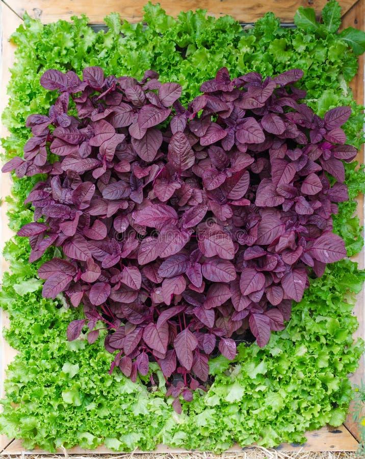 Ornamental plants is heart shape.
