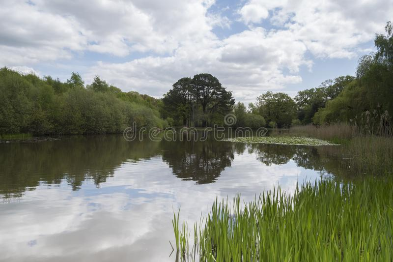 Download The Ornamental Pond, Southampton Common Stock Photo - Image of lake, trees: 115969218