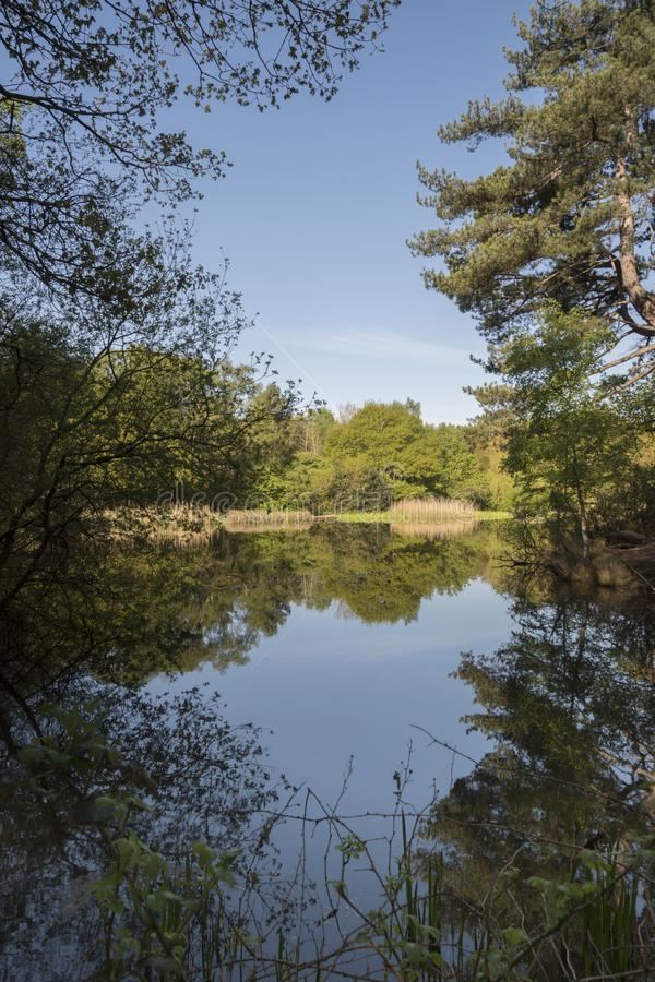 Download The Ornamental Pond, Southampton Common Stock Photo - Image of trees, reflection: 115969408