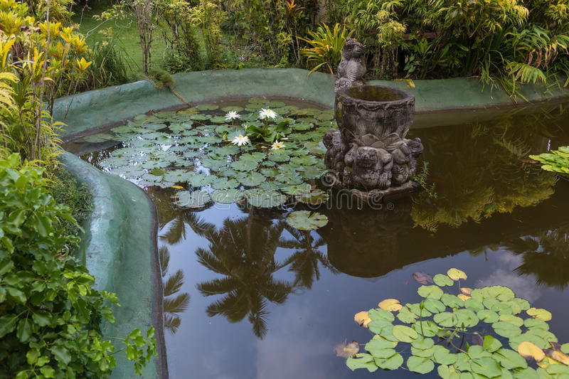 Ornamental pond with water lilies. Beautiful ornamental pond with white water lilies , palm trees reflected in water royalty free stock photography