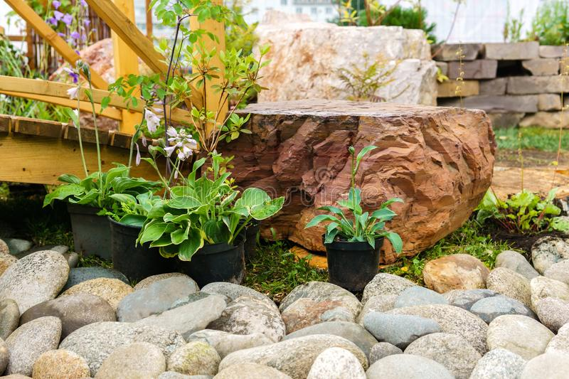 Ornamental potted plants prepared for planting in open ground. In rockery royalty free stock photography