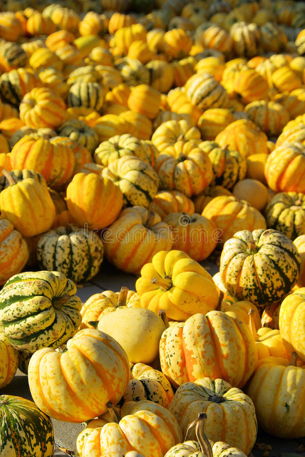 Download Ornamental pumkin stock photo. Image of halloween, holiday - 10248756