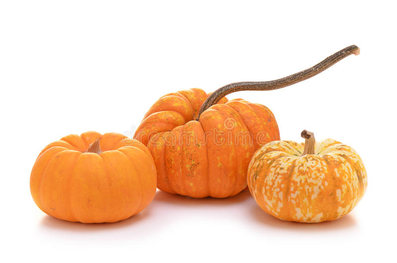 Download Ornamental Pumpkins Stock Photo - Image: 36962690