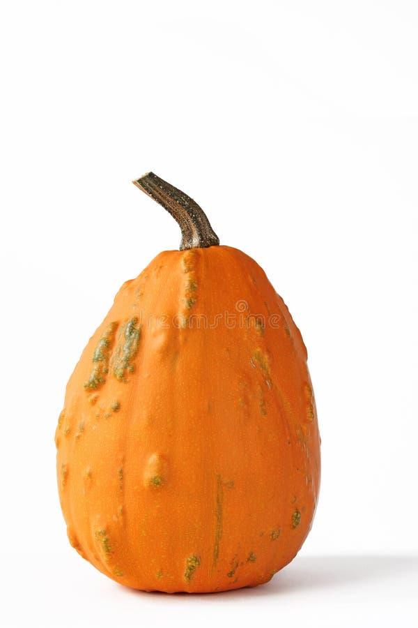 Download Ornamental squash stock image. Image of autumn, pepo - 28235795