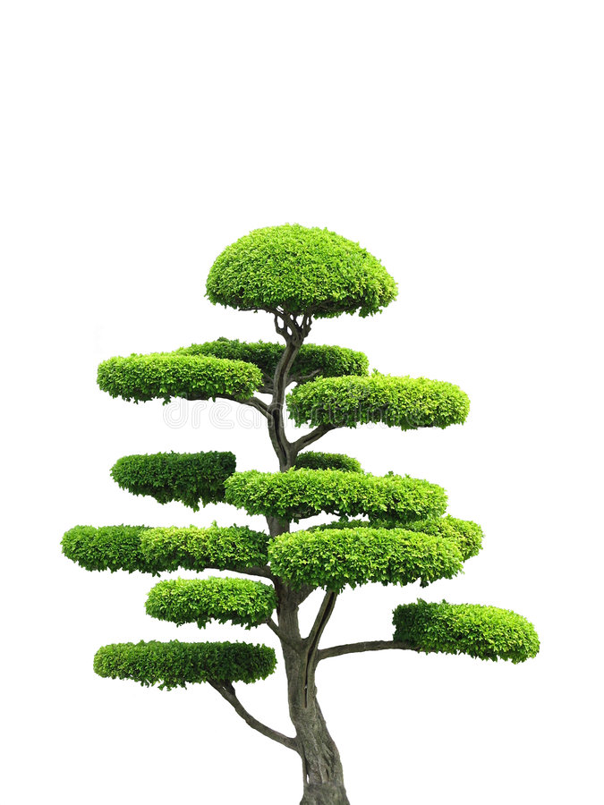 Download Ornamental Tree stock photo. Image of asian, tree, design - 3855834